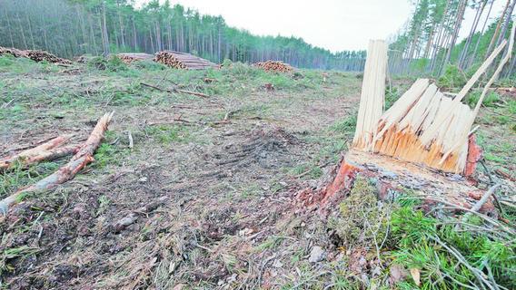 Bei Abenberg: Sandgrube statt Wald