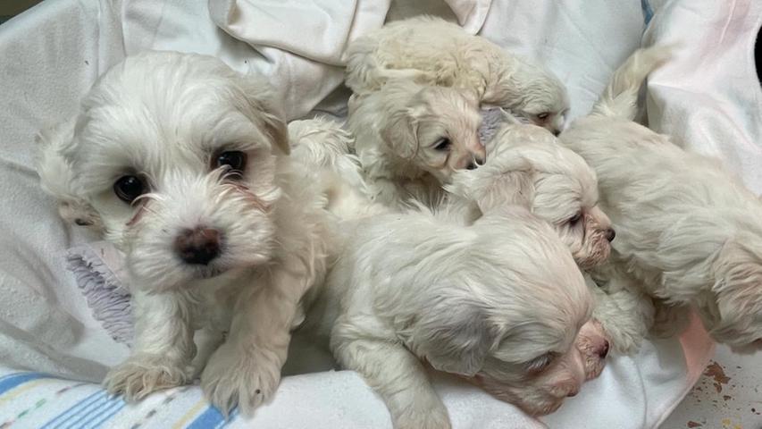 101 Hundewelpen: Illegaler Tiertransport in Nürnberg abgefangen