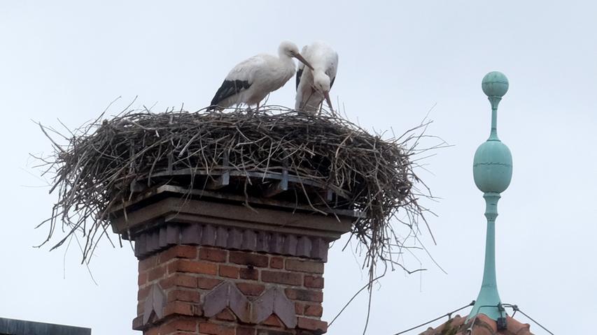 Endlich zu zweit: Im Februar nahm der Storch auf dem Horst auf dem Dach der VHS Forchheim seinen Platz ein - und im März folgte der Lebensabschnittspartner. Wie sagt man so schön: Love is in the air.