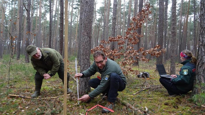 Forstliche Gutachten: Wie geht es dem Wald-Nachwuchs?