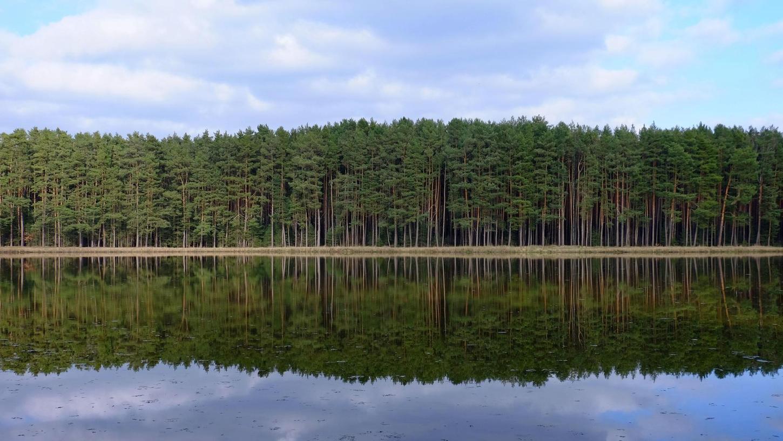 Quasi spiegelbildlich: Ein Röttenbacher Waldrand kann so aussehen, oder ...