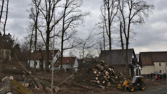 Bammersdorf:  Bäume auf Privatgrundstück gerodet
