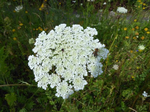 Am Karlsgraben entstanden vergangene Woche die ersten Blühflächen, die künftig einen insektenfreundlichen Gürtel rund um die Altmühlstadt bilden sollen.