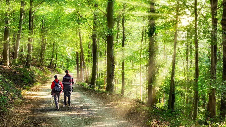 Das Sonnenlicht bricht durch Äste und Blätter. Gerade im Frühjahr und Sommer genießen viele Menschen die besondere Atmosphäre im Wald – und tun damit etwas für ihr Wohlbefinden.