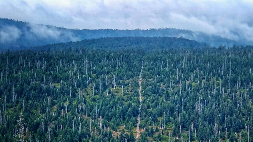 Inzwischen hat sich der Wald verjüngt, der Wanderpfad an der Himmelsleiter ist als schlankes Band erkennbar, es spitzen nur noch wenige tote Bäume heraus.