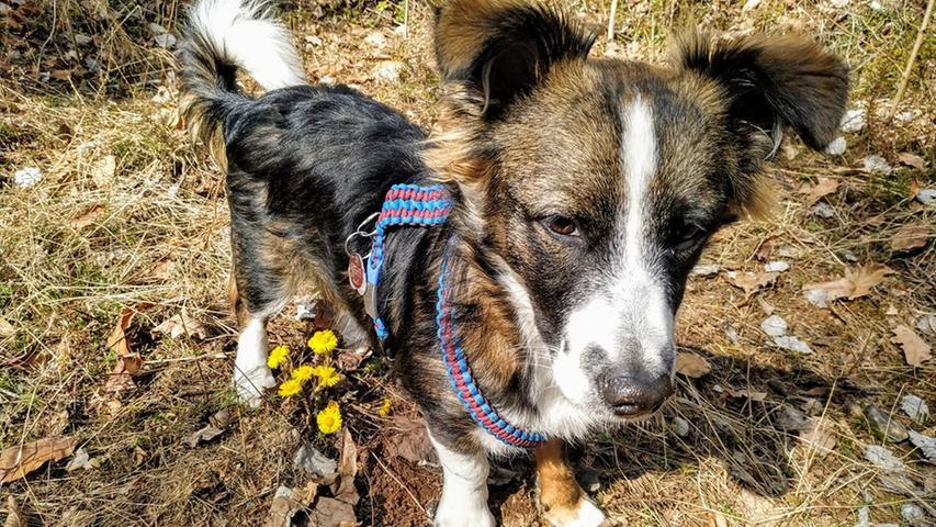 Gefunden! Der Hund vonBianca Badura hat die ersten Frühlingsboten entdeckt.