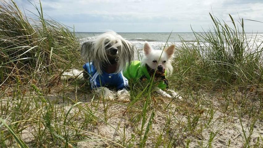 Auch im Frühling kann der Wind die Haare noch so manches Mal zerzausen – vor allem, wenn man wie Claudia Hilger mit ihren Hunden am Meer unterwegs ist.