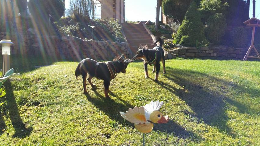 Die zwei Vierbeiner vonLinda Adlon genießen das warme Frühlingswetter und spielen im Garten.