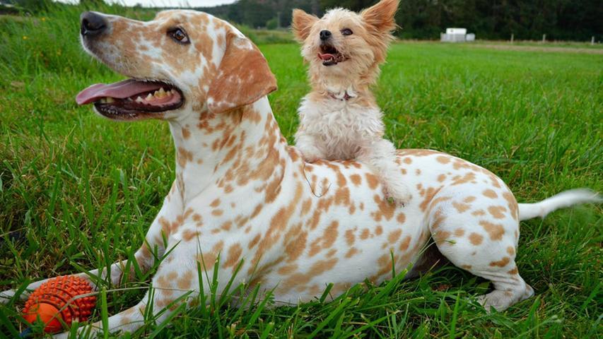 Die beiden Hunde von Nadja Tamara haben sichtlich Spaß im Grünen.