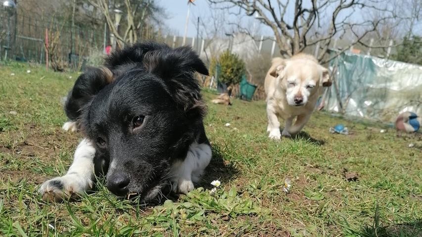 Dobby und sein Kumpel Buffi toben im Garten.