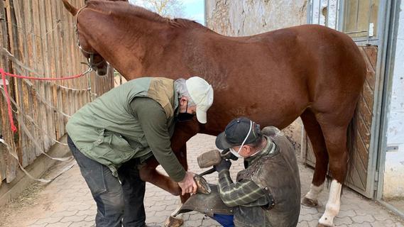 Pediküre beim Pferd: Das Säubern und Ausschneiden der Hufe ist eine anstrengede Arbeit und allein kaum machbar. Deshalb halten in der Regel die Besitzer der Pferde, wie hier Josef Schnöller, auf.