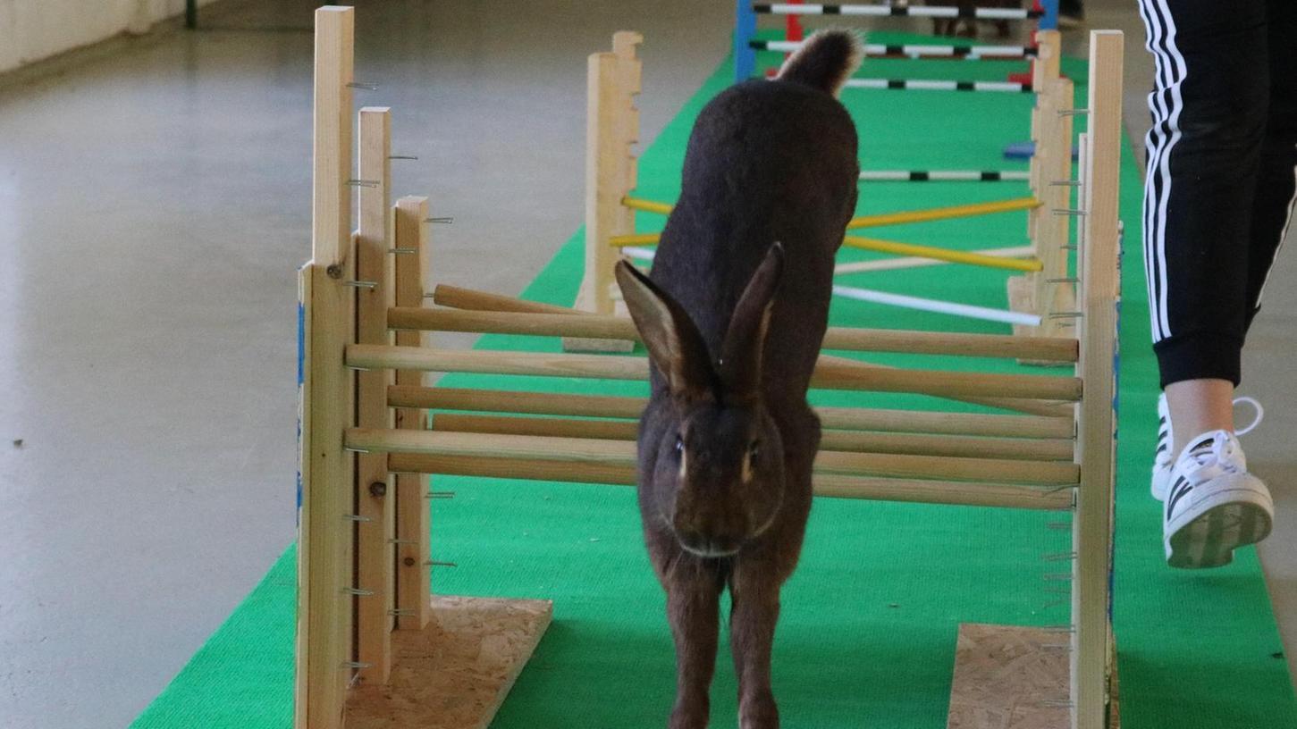 Wenn Lady will, kann sie richtig hoch springen und absolviert mühelos den Kanin-Hop-Parcours.