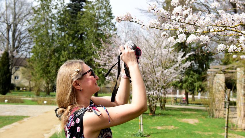 FOTO: Hans-Joachim Winckler DATUM: 01.04.21 MOTIV: Frühlingserwachen im Fürther Stadtpark - Kirschblüte (Zierkirsche) im Rosengarten