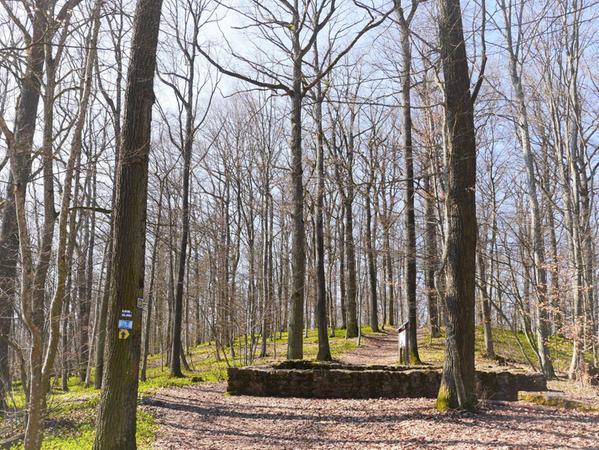 Auf Gunzenhausens schönstem Spazierweg entdeckt man allerhand römisches Gemäuer und kann die Leuchtkraft des Wald-Bingelkrauts bewundern.
