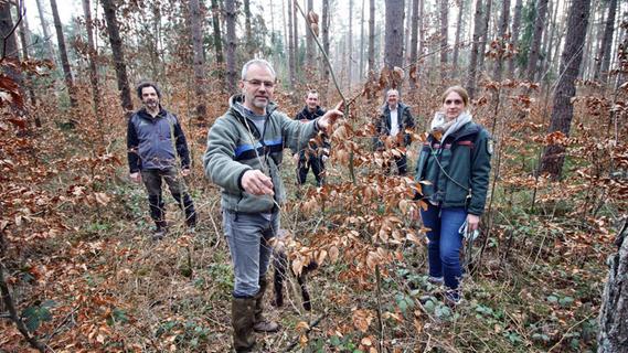 Klimawandel: Bei Rohr wächst der Wald der Zukunft