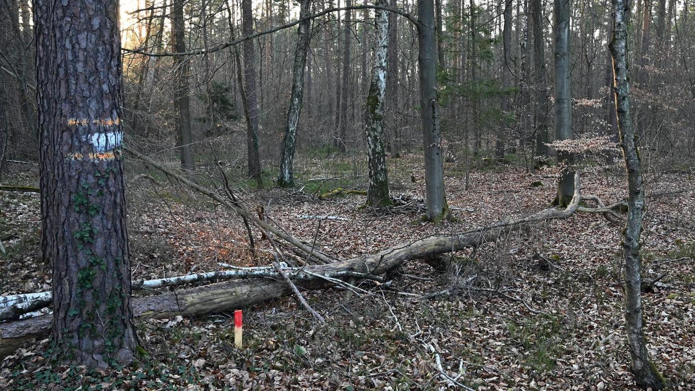 Im Wald nahe der Grundschule in Spardorf, der zum Sportplatzgelände werden soll, sind Grundstücksgrenzen abmarkiert.