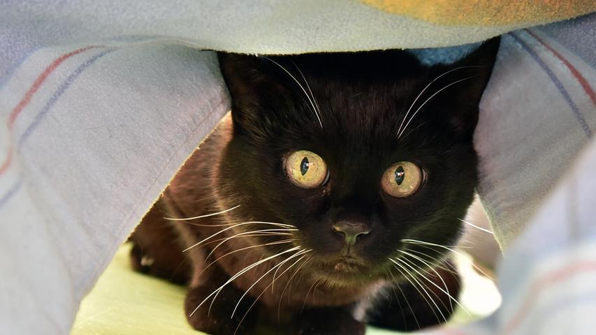 Micky ist schon eine etwas ältere Katzen-Dame; sie ist 2007 geboren und lebte ihr ganzes Leben bei einer älteren Dame. Da diese leider ins Pflegeheim musste und die Katze nicht länger versorgen konnte, musste sie Micky schweren Herzens im Tierheim abgeben. Micky hätte gerne wieder eine Einzelperson, zu der sie Zutrauen fassen kann. Sie wünscht sich ein eher ruhiges Zuhause mit regelmäßigem Freigang.