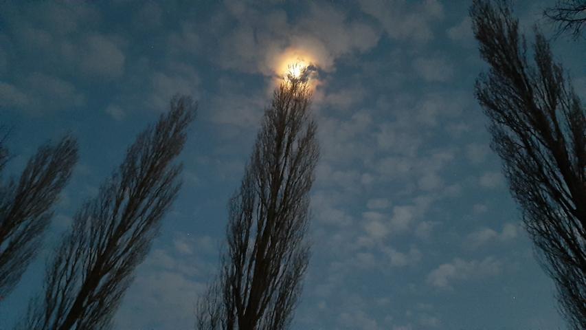 Natürliche Straßenbeleuchtung: Der Mond über den Alleebäumen an der Verbindungsstraße von Baiersdorf nach Röttenbach.