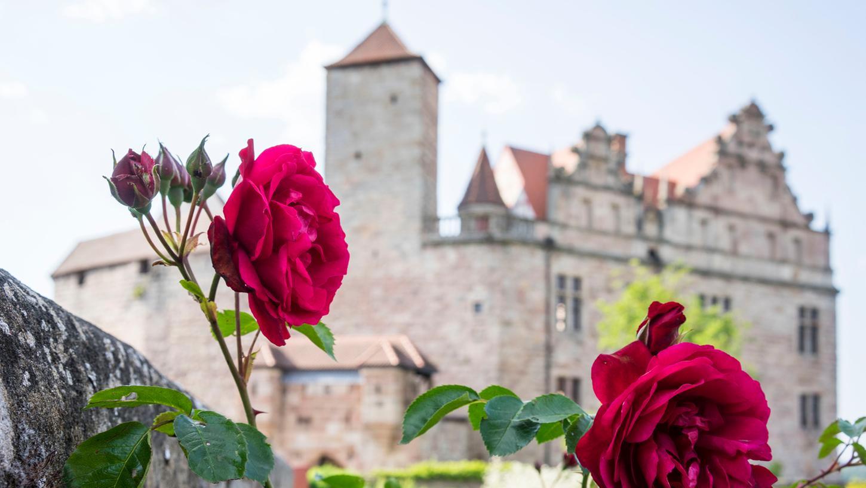 Cadolzburg bei Fürth, Burggarten, Rosen vor der Burgfassade