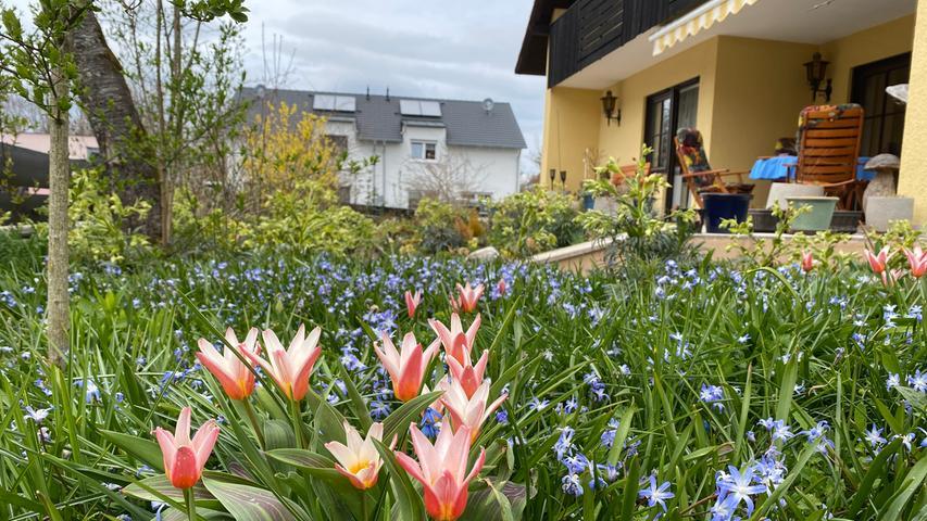 Er blüht und summt: Rundgang durch den Naturgarten Würth in Eckersmühlen