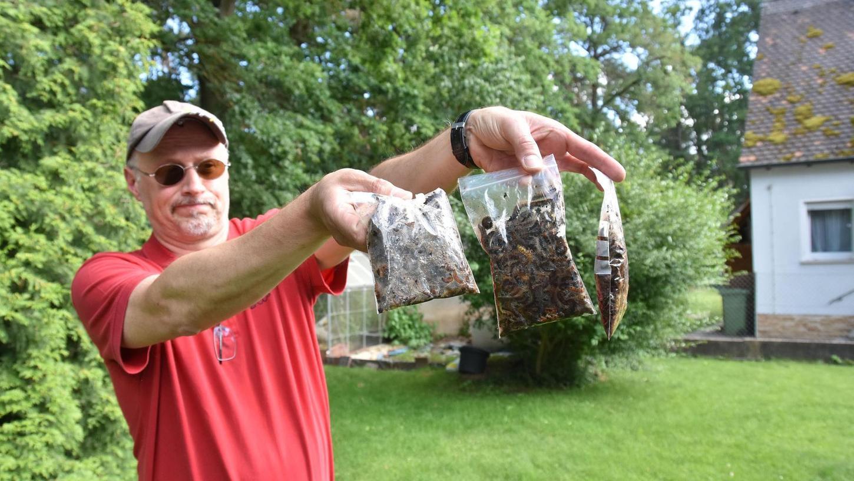 Beutelweise hat Jürgen Gmehling die Raupen des Eichenprozessionsspinners im vergangenen Sommer in seinem Garten aufgesammelt. Der Oberasbacher und seine Nachbarn an der Zwickauer Straße litten besonders unter der Plage.