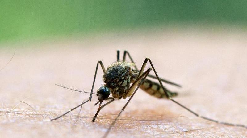 Ideale Wetterbedingungen für Stechmücken: Es ist im Juni heiß und nass. Da werden die Insekten schnell zum Ärgernis.