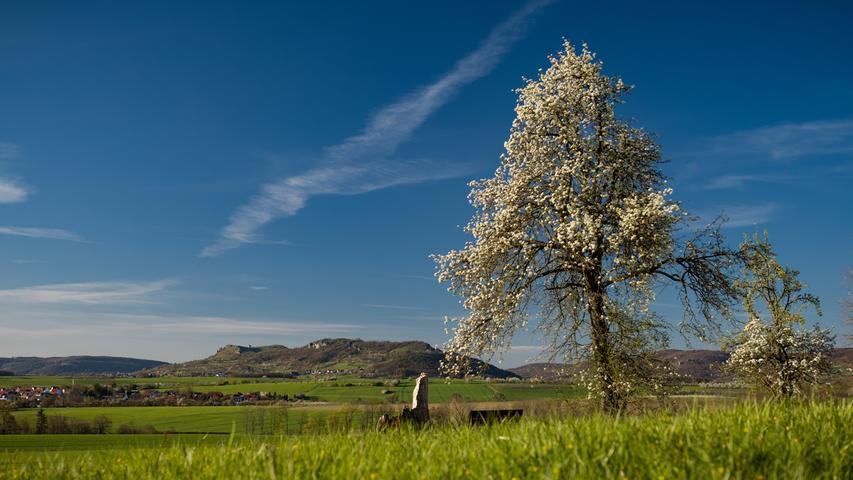 Die Bäume blühen, die Sonne scheint: NN-Leser Winfried Lösel aus Kunreuth hat nicht nur das Ehrenbürg-Massiv traumhaft in Szene gesetzt.