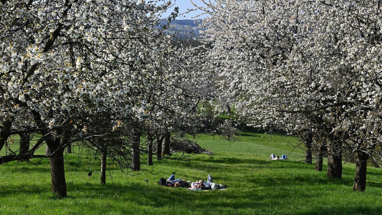 Picknick unter einem Blütenhimmel: Vor allem Städter zieht es raus ins Freie. Wem die Wiese gehört und ob sie hier liegen dürfen, interessiert allerdings nicht alle.