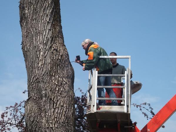 Die Bäume wurden von Experten untersucht.
