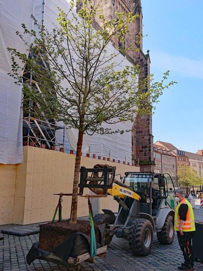 Am Mittwochnachmittag wurden die Kübel platziert und die ersten Bäume eingepflanzt. Sör übernimmt künftig ihre Pflege.