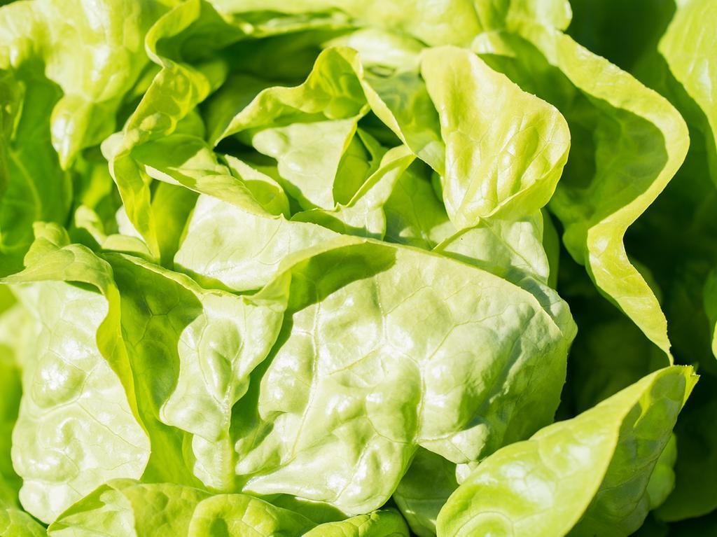 Kopfsalat enthält unter anderem Zitronen- und andere Säuren. Das sorgt für frischen Geschmack. Daneben kommen Vitamin C, Folsäure und Beta-Carotin, das Provitamin A, in ihm vor.