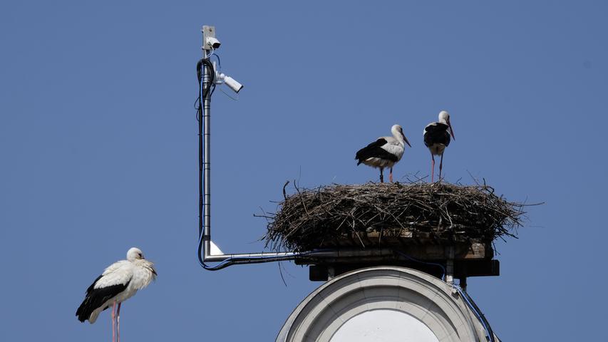 Eine Kamera filmt die Störche auf dem Storchenrathaus, live zu sehen auf einem Bildschirm in der Sparkasse nebenan.