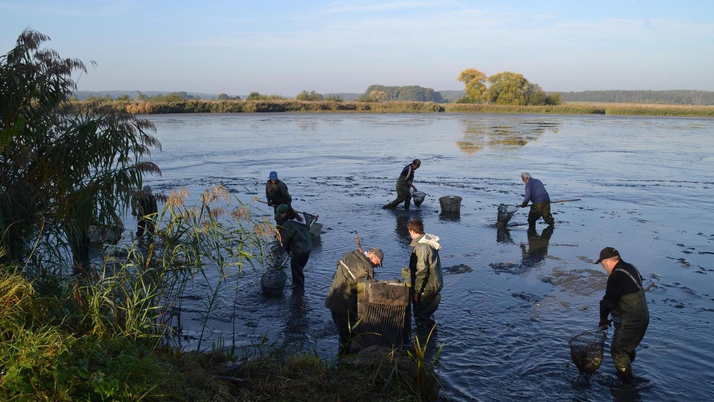 Abfischen am Blätterweiher – auch das ist gewürdigte Kultur.