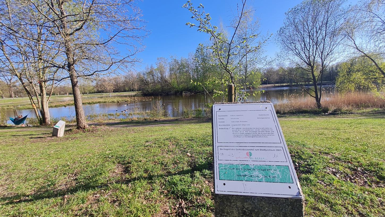 Der Baumbotanische Park am Marienbergparkweiher ist in einem schlechten Zustand. Seit 20 Jahren gibt es diese Anlage, die anlässlich der 950-Jahr-Feier der Stadt errichtet wurde. Der Standort ist allerdings problematisch.