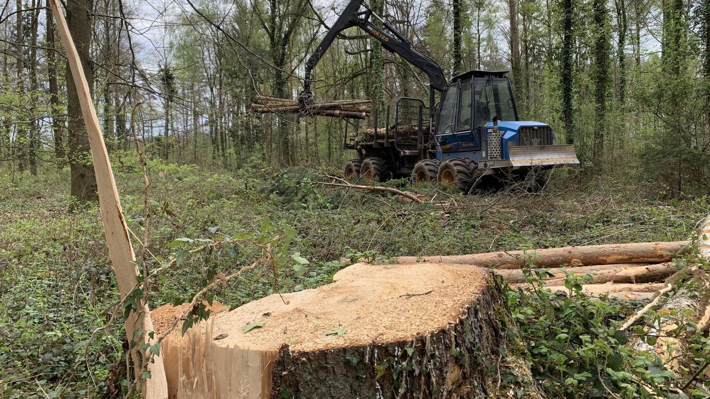 Auf den Flächen mit Mischwald fällt der Harvester Bäume, um dem Aufwuchs mehr Licht zu verschaffen. An anderen Ecken im Faberwald wurden Kiefern und Fichten komplett entfernt. Hier soll aufgeforstet werden.