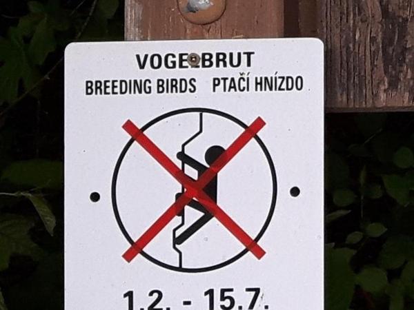 Das Schild weist darauf hin, dass wegen Vogelbrut nicht geklettert werden darf.