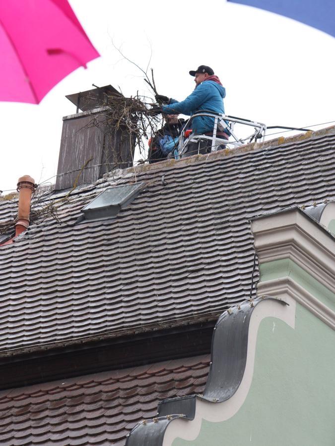 Schon mehrfach rückte die Feuerwehr Gunzenhausen in den vergangenen Wochen an, um der Stadt beim Entfernen – hier durch zwei Mitarbeiter – der Nester zu helfen.