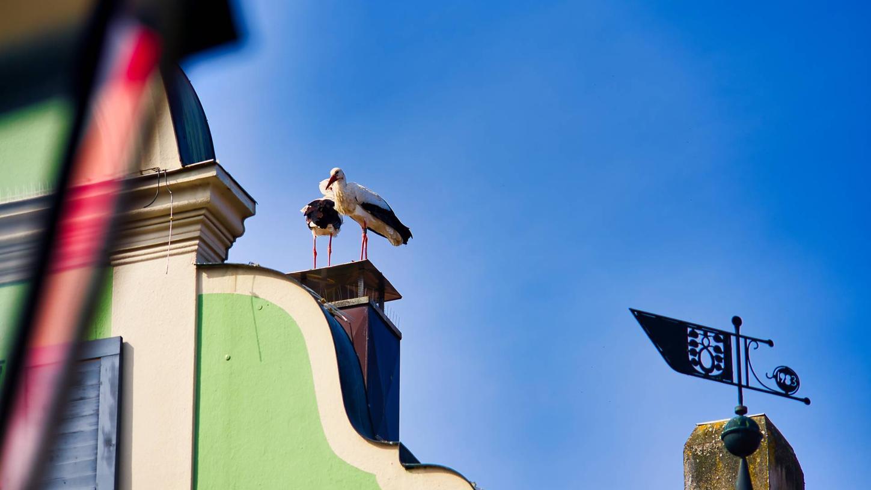 Auf diesem Schlot auf demHanselmann-Haus hat das Weißenstorchpaar zuletzt versucht, ein Nest zu bauen.