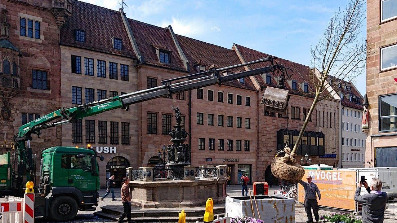 Jüngste Pflanzaktion: An der Lorenzkirche wurden Bäume in großen Kübeln aufgestellt - wegen der darunterliegenden U-Bahn können sie hier nicht ins Erdreich gesetzt werden.