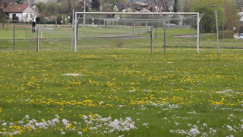 Während Löwenzahn und Gänseblümchen den Fußball-Rasen des ASC Sengenthal erobert haben, verzeichnen die Sportvereine in der anhaltenden Pause einen Mitgliederrückgang.