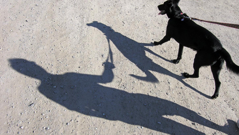 Manche Bundesländer haben schon einen verpflichtenden Hundeführerschein - Bayern noch nicht.