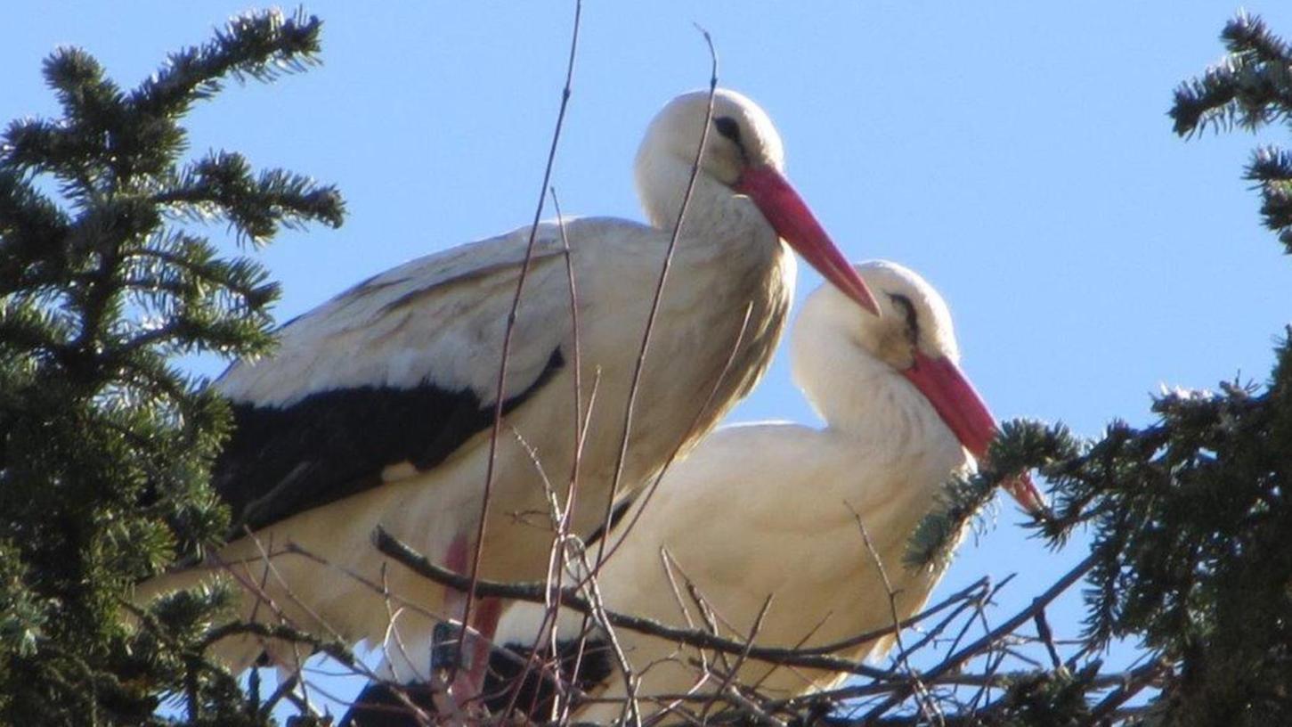 Inzwischen ist es mithilfe der Fotos eines Lesers gelungen, die Herkunft eines Storches zu bestimmen.