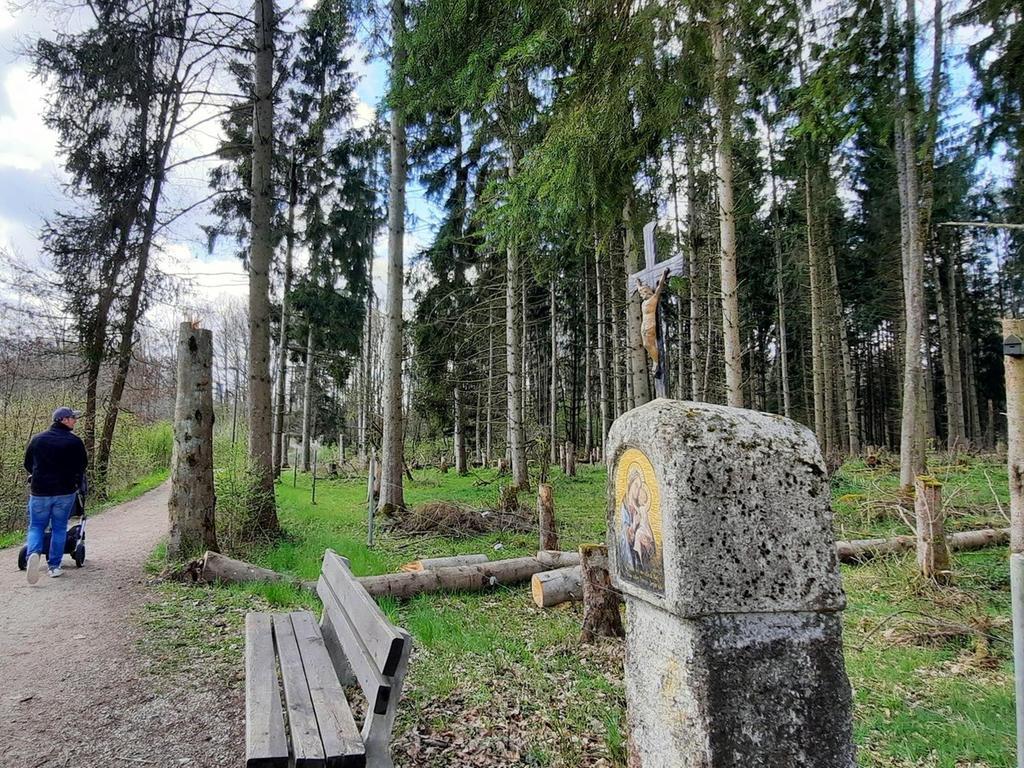Ausgedünnt wurde vom LBV der Wald im Naturschutzgebiet Leonie neben dem Rad- und Fußweg nach Degelsdorf. Viele Stämme blieben für Insekten oder baumbrütende Vögel stehen oder liegen.