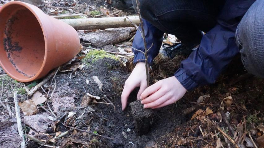 Die Konfirmanden und ihre Eltern pflegten die Bäumchen über den Winter zuhause und pflanzten sie nun aus.