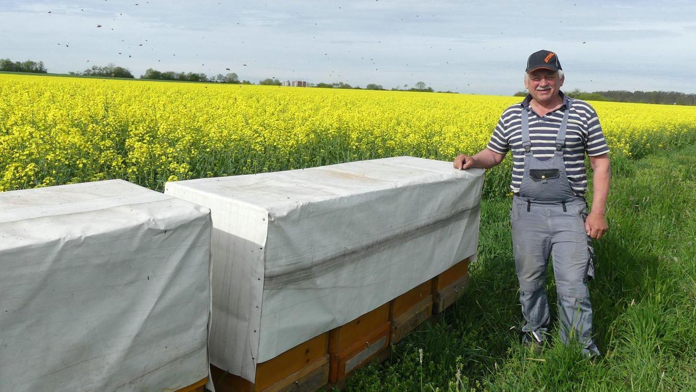 Das Rapsfeld dient Imker Peter Seeberger als Bienenweide, ohne den Raps würde die Bienenzucht schwierig werden.