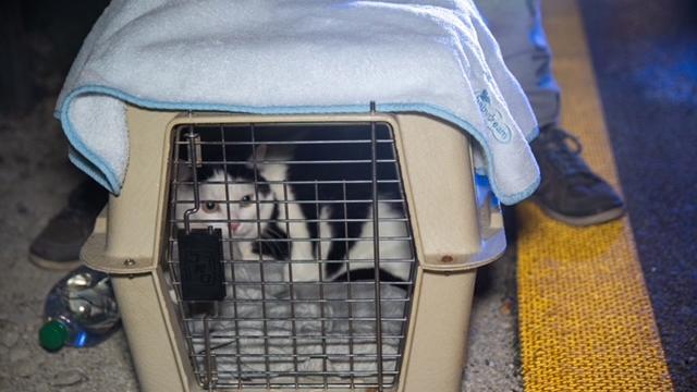 Frau rettet Katze aus brennendem Pkw