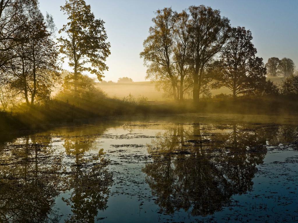 """Fotowettbewerb Waischenfeld: 3. Platz: Foto-Nr. 16 mit 12 Punkten: Titel: """"Novemberweiher"""", Eichenbirkig / Kategorie: Landschaft, Natur: Foto: Klemens Haas aus Eberstalzell, Österreich;"""
