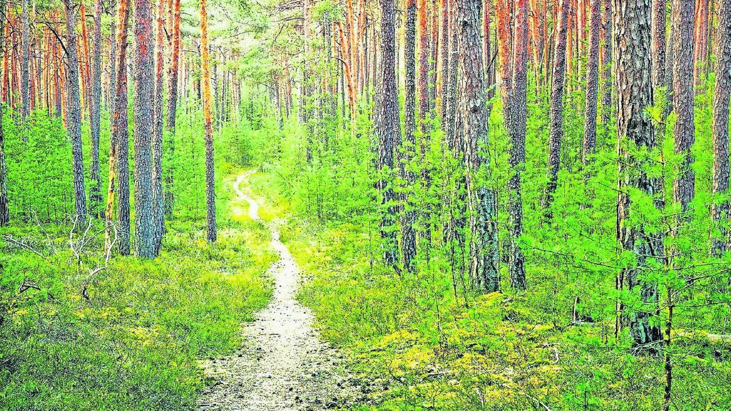 """""""Optimal vorbereitet auf den Sommer"""": Der verregnete Mai ist für uns bislang nicht gerade schön. Die Wälder aber rüsten sich damit bereits für die Hitze."""