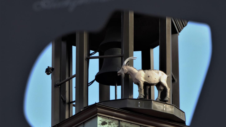 """""""Tierisch was los"""" ist auf der Innenstadtrallye mit unterhaltsamer Schnitzeljagd. Dabei lernt man Neustadts tierische Seite kennen."""