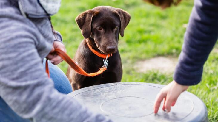 Haben Frauchen und Herrchen ihren Hund unter Kontrolle oder macht der Vierbeiner nur das, worauf er selbst Lust hat? Ein Hundeführerschein soll Ersteres in manchen Bundesländern sicherstellen.
